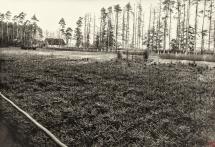 21 - Szkółka leśna