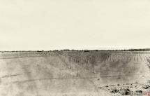 34 - Część plantacji drzew owocowych 1921