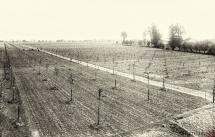 36 - Część plantacji drzew owocowych 1921 do roku 1926 12 000 dezewek