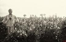 43 - Nasiennictwo kwiatów
