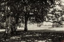6 - Widok na park