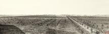 69 - Część plantacji - ogółem 400 morgów