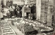 74 - Pakowanie pomidorów na eksport